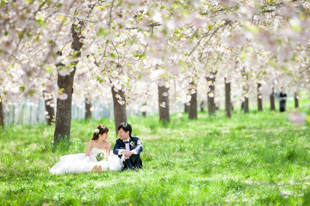 小布施の桜ロケーション