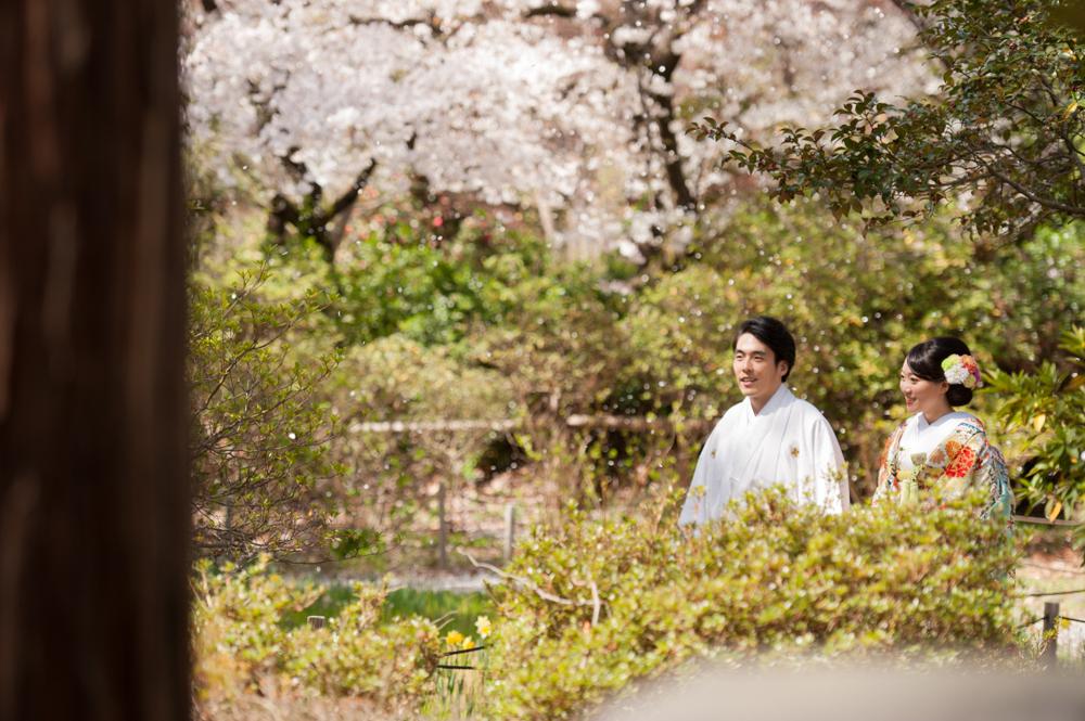桜ロケーション