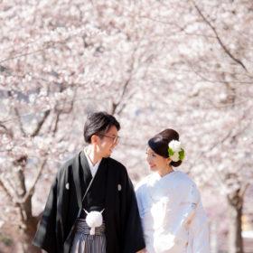 桜ロケーションフォト