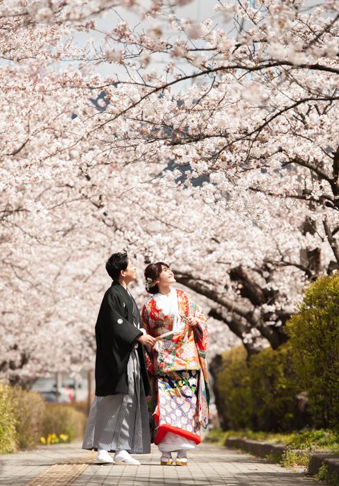 和装ロケーション桜