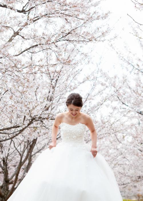 ウェディングドレス前撮り桜