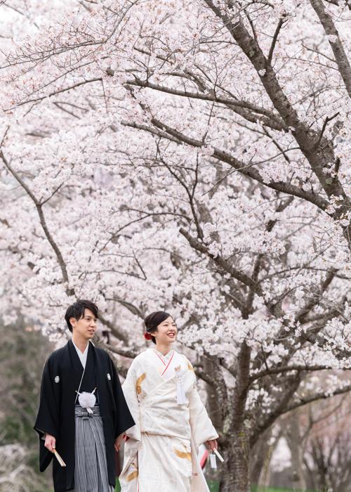 桜和装前撮り